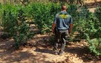 La Guardia Civil desmantela una plantación de marihuana. / Guardia Civil