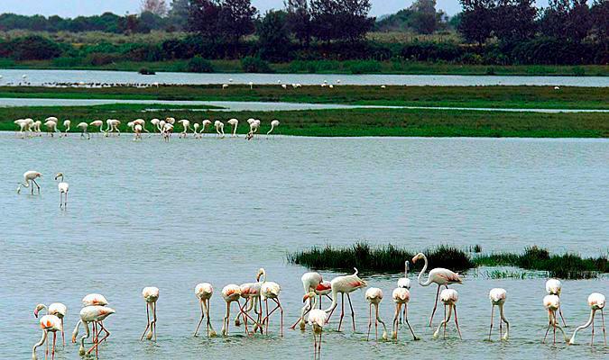 El Parque Nacional de Doñana celebra este miércoles 50 años de su ...