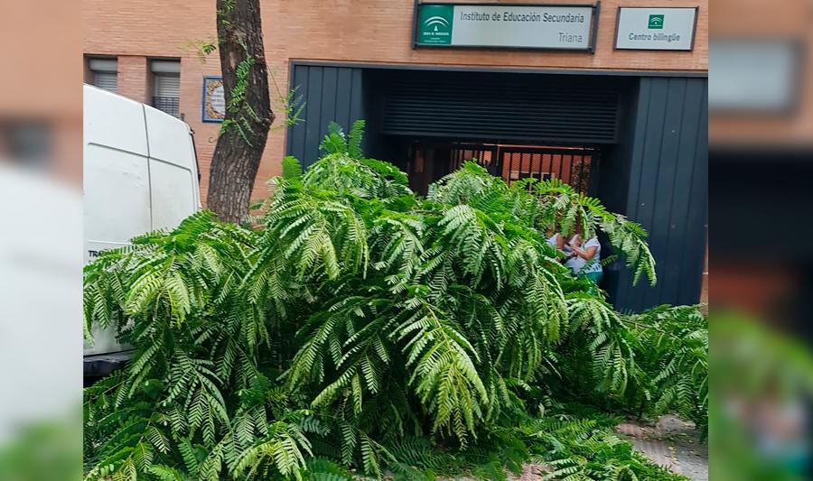 El fuerte viento provoca una veintena de incidencias en Sevilla capital