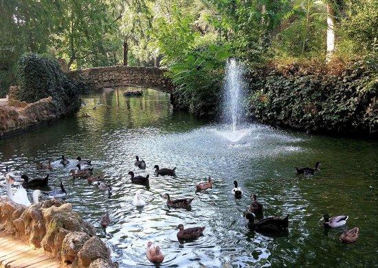 M s de dos millones de euros para recuperar los jardines for Imagenes de estanques para patos