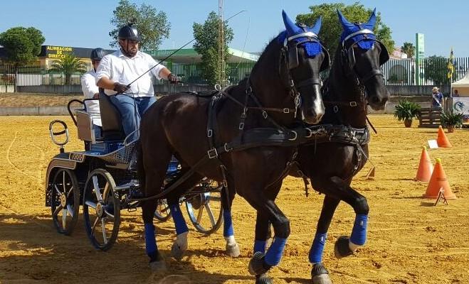 El caballo mueve 1.500 millones de euros en Andalucía
