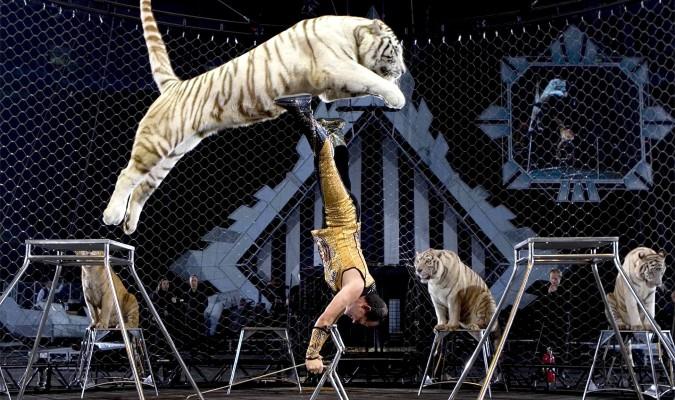 Arahal prohíbe los espectáculos con animales
