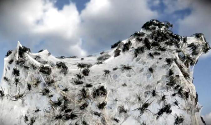 """Veamos como pueden llover arañas con """"cabello de ángel"""" ..."""