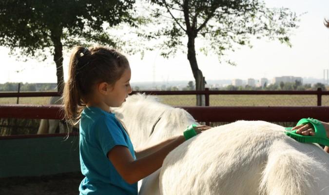 Caballos y ponis para ayudar y educar a niños de apoyo escolar
