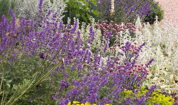 Jardines mediterr neos jardines de secano for Jardines mediterraneos pequenos