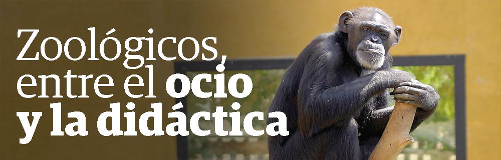 Zoológicos, entre el ocio y la didáctica