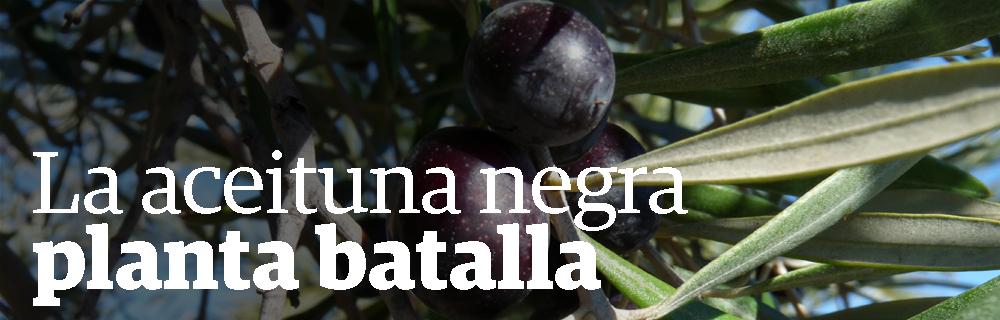 La aceituna negra planta batalla