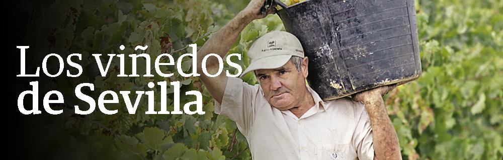 Los viñedos de Sevilla