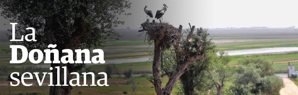 La Doñana sevillana
