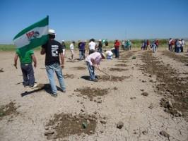 Miembros del SAT sembrando hoy en Las Turquillas.