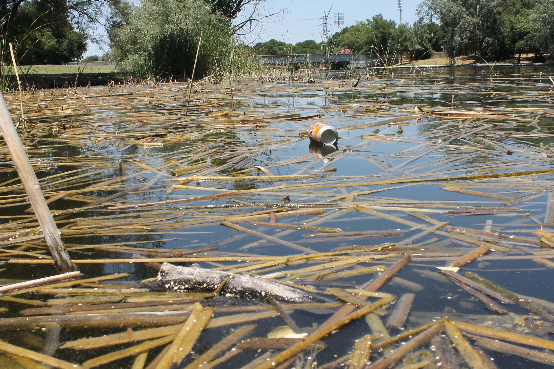 Las eneas que rodean el lago se desbrozaron, pero las ramas no se retiraron del agua.