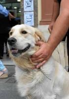 El 95% de las mascotas registradas son canes
