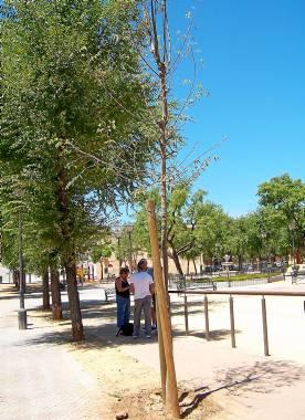 Árboles y plantas se están secando por falta de riego. Fotos: El Correo.