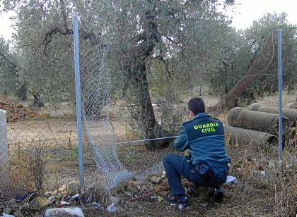 Arahal(Sevilla) 4/11/11   Robos en el campo (Arahal) Foto: El Correo