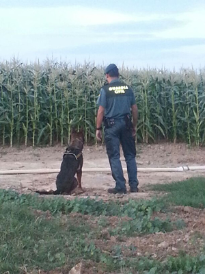 perro-guardia-civil-vertica
