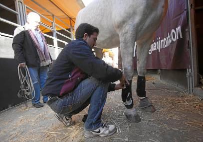 Para evitar la cojera crónica los expertos recomiendan un cuidado exhaustivo del equino. Foto: J.M. Espino (Atese)