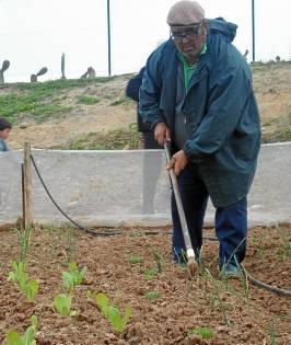 Miguel El Cuenca, trabajando en su parcela.