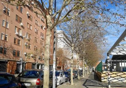 Los 43 plátanos de sombra marcados para su tala están junto a farolas en siete calles de Sevilla Este.