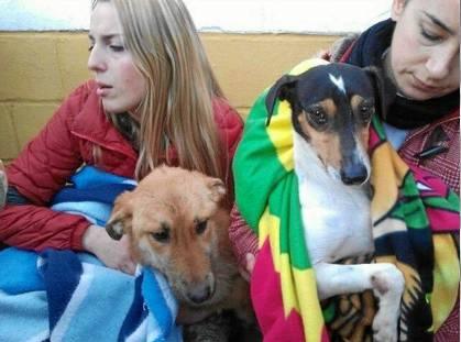 Dos de los perros rescatados de la Protectora protegidos por voluntarias de la Asociación Lasa.