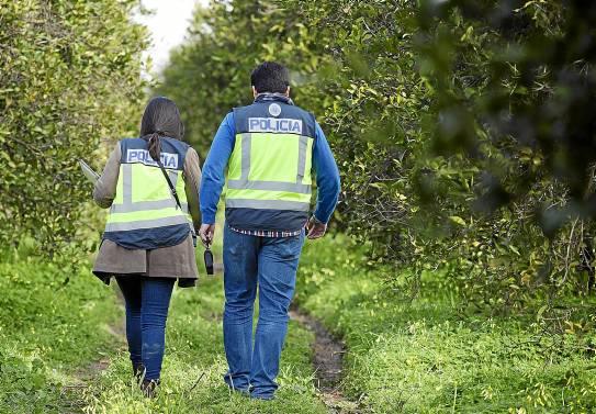 Dos agentes del Grupo de Menores inspeccionan un naranjal para comprobar que no hay menores en edad escolar trabajando.