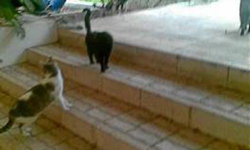 gatos-urbanismo-2