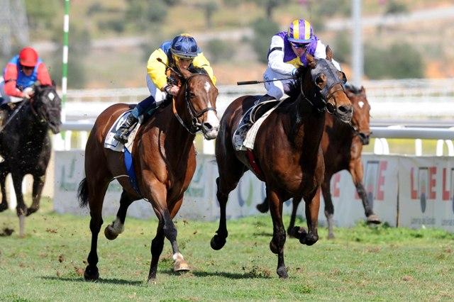 El caballo 'Mil Azul', a la izquierda, llegó el primero a la meta este domingo en el Gran Premio de Andalucía. /J. J. ÚBEDA
