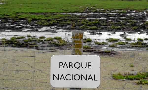 La comisión de Agua y Biodiversidad del Consejo de Participación del Espacio Natural de Doñana rechazó el proyecto del Puerto. / David Estrada