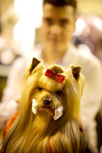 Exposición Internacional Canina en FIBES. / Pepo Herrera