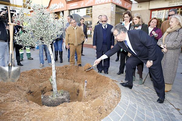 Momento de la plantación del olivo en la Plaza de la Encarnación.