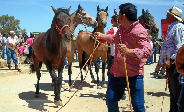 Las cargas y descargas de caballos entre los tratantes no cesaron durante la maána de ayer en la Feria del Ganado de Los Palacios y Villafranca. / A. R.