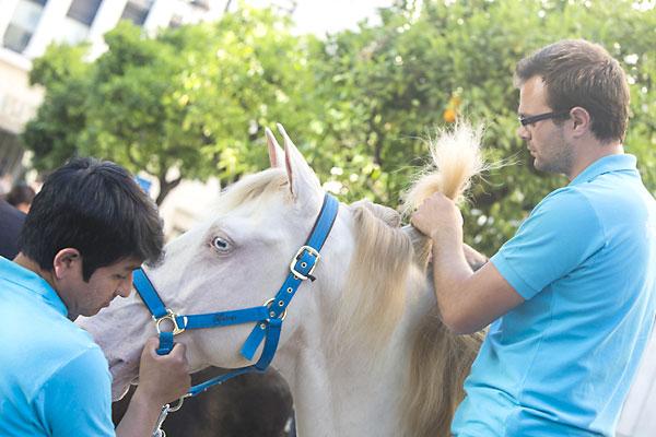 Muestra de caballos de rejoneo en la Plaza Nueva. / Carlos Hernández