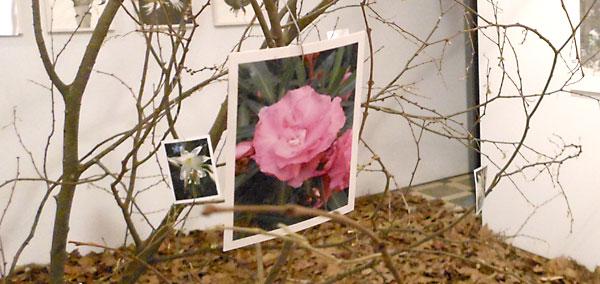 Detalle de una de las fotos colgadas de las ramas que presiden la estancia. La idea es formar una hermosa copa.