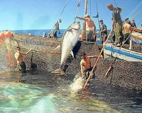 La almadraba es una de las técnicas para la captura del atún empleada en Andalucía.
