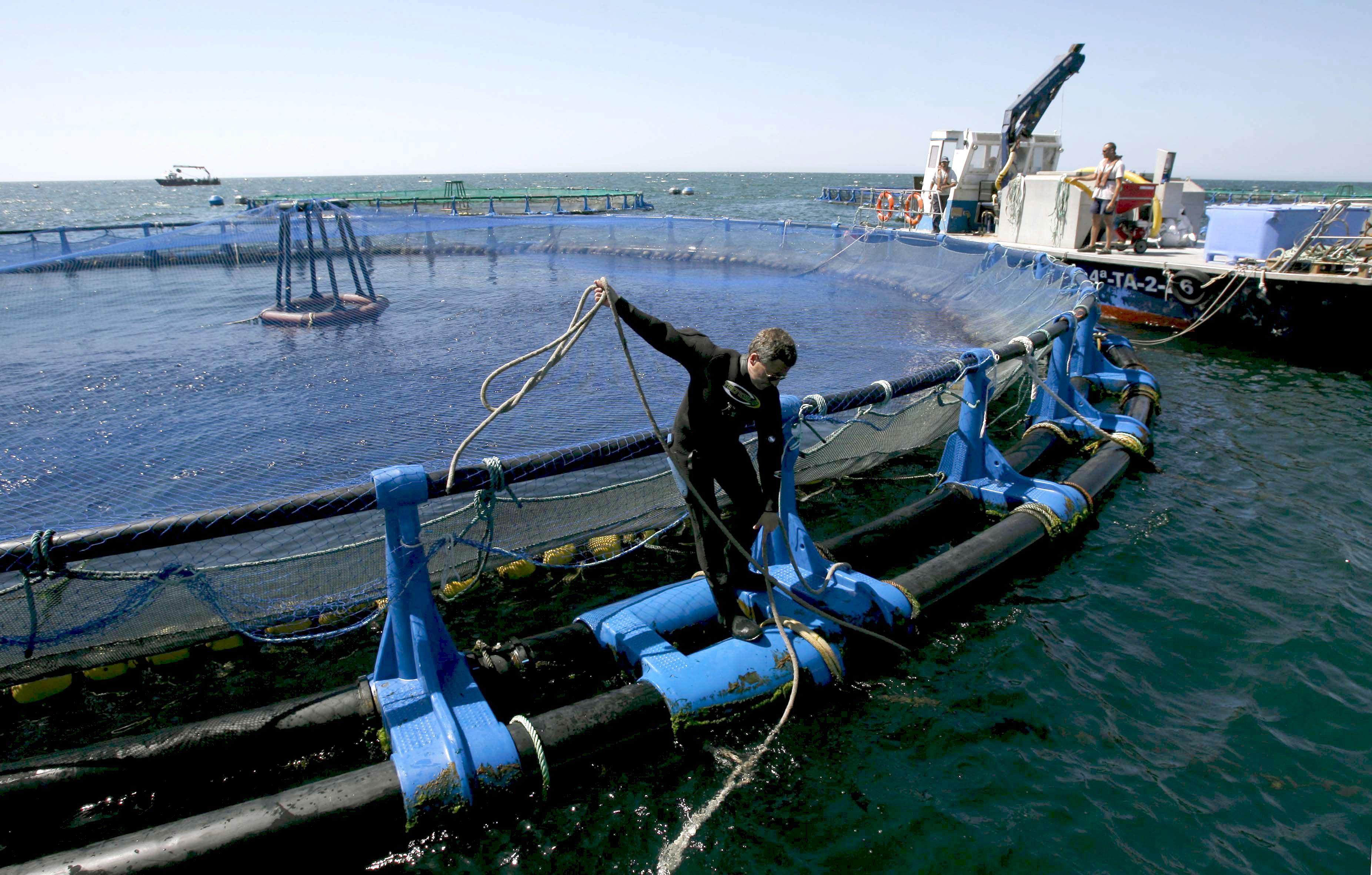 Un hombre trabaja en unas instalaciones marinas de cultivo de lubinas frente a la costa malagueña. / efe