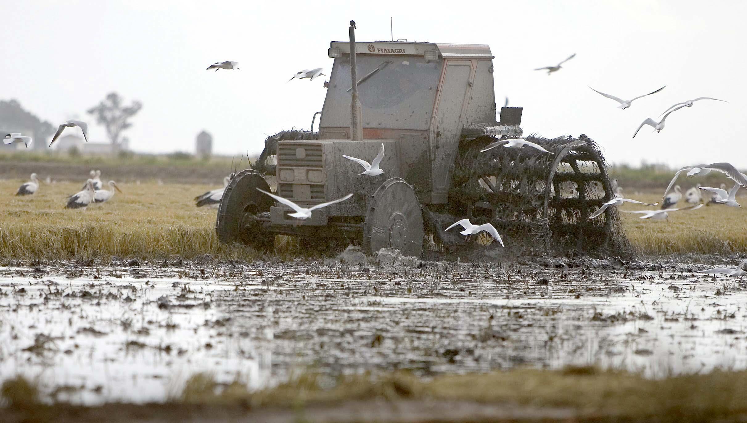 Un tractor en los campos de arroz de Isla Mínima. / José Manuel Vidal (EFE)