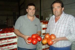 El mayor productor de tomates palaciegos, Rafael Algarín, y su hijo, Manuel Jesús Algarín. Foto: A. Romero