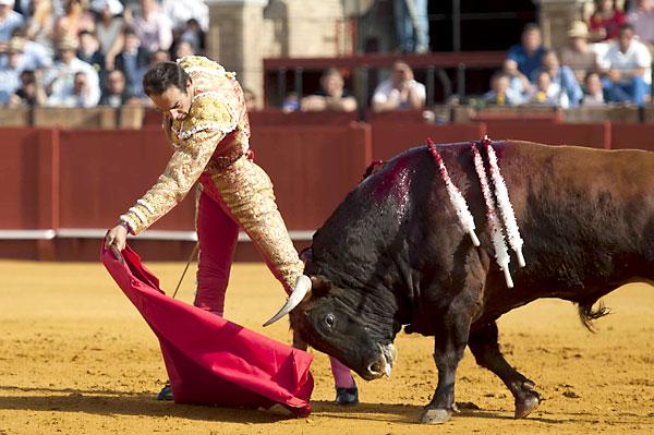 Toro de El Cid. / Foto: J.M.Paisano