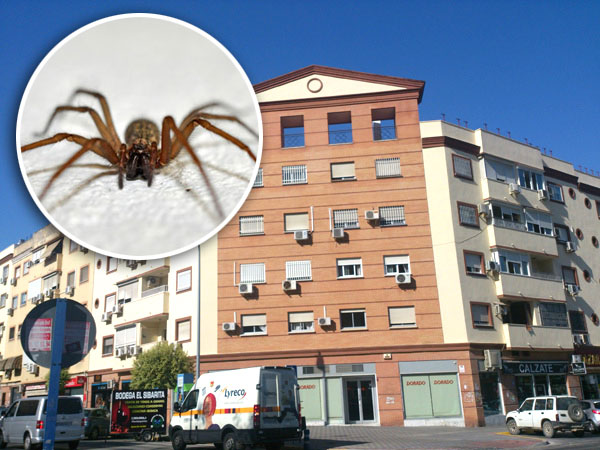 El edificio España del barrio de Montequinto fue donde aparecieron los primeros ejemplares de esta araña. / Helena Peña