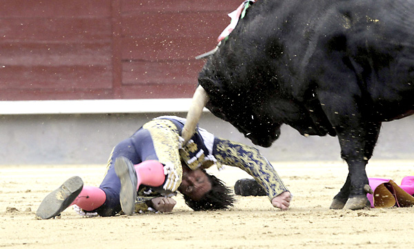 El diestro David Mora, arrollado por su primer toro, de la ganadería de El Ventorrillo, en el duodécimo festejo de la Feria de San isidro, hoy en la plaza de Toros de Las Ventas. EFE/Kiko Huesca