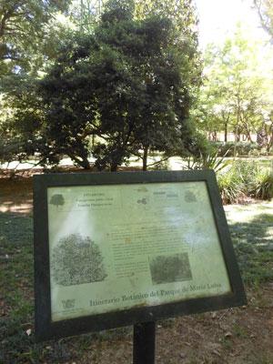 Uno de los letreros que aún permanecen en pie del itinerario botánico. Foto: C.R.