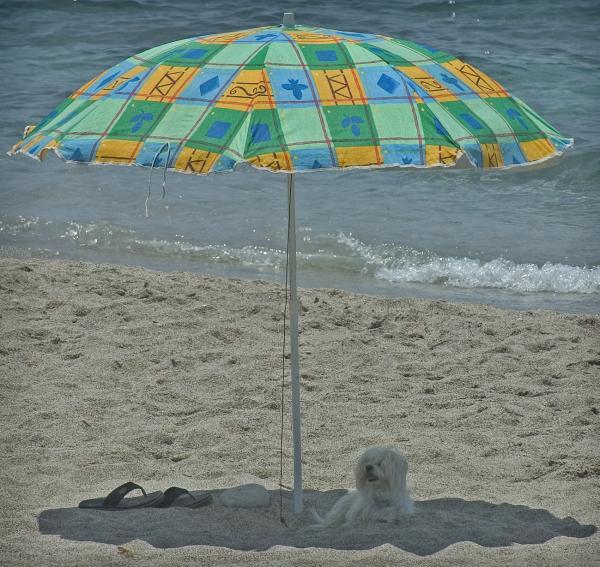 Playa almeriense de Cabo de Gata. / JOSÉ MANUEL VIDAL / EFE