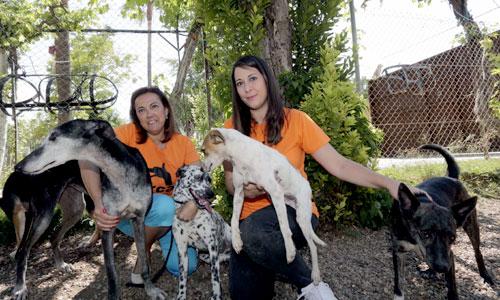 Nura Salti (derecha) voluntaria de Arca Sevilla junto a Mamen Gallardo (izquierda) presidenta de la asociación posan con algunos de los perros que buscan ser adoptados por una familia. / Foto: José Luis Montero.