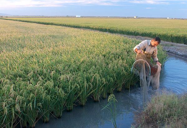 Los organismos internacionales temen que el dragado afecte a las marismas del Doñana. / El Correo