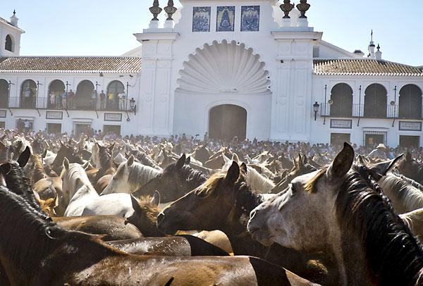 Manada de yeguas ante las puertas del Santuario del Rocio (Almonte - Huelva) en la denominada Saca de las Yeguas. /  EFE/Julián Pérez