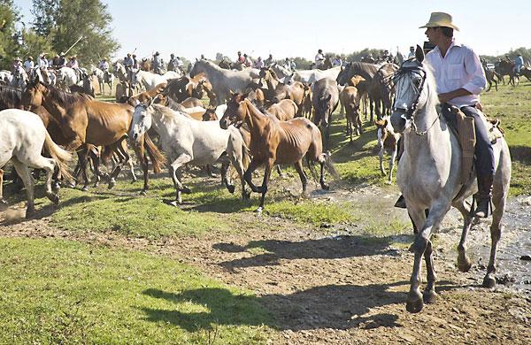 Yegüerizos conducen a la manada en la Saca de las Yeguas. EFE/Julián Pérez