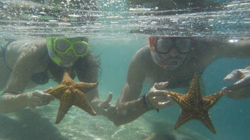 La pareja buceando con estrellas de mar en el Mar Caribe de Panamá.