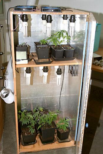Plantas de marihuana encontradas en el inmueble. / E.P.