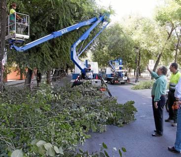 El alcalde,JuanIgnacio Zoido, supervisando esta semana los trabajos de poda en el barrio de Triana. / El Correo