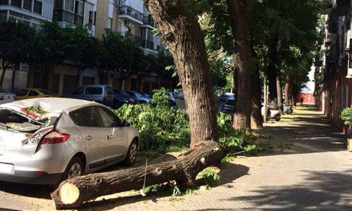 Un coche ha quedado destrozado en Triana tras la caída de una rama de gran tamaño.