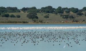 Dehesa de Abajo, uno de los puntos donde más aves se avistan en Doñana.